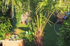 15-08-Trachycarpus Fortunei 03