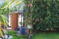 16-04-Magnolia 'Genie' 02