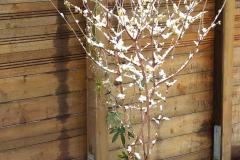18-02-chinesische Winterblüte 01