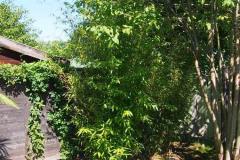 17-08-Bambus 01