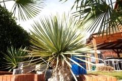 18-03-Yucca rostrata 01