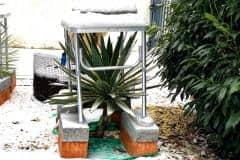 18-12-Yucca gloriosa 01