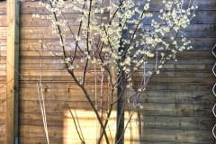 19-03-chinesische Winterblüte 02