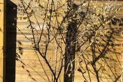 19-02-chinesische Winterblüte 01