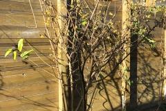 20-02-chinesische Winterblüte 01