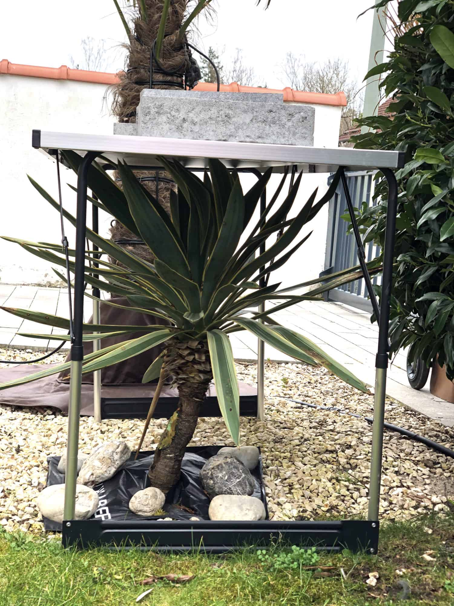 20-02-Yucca gloriosa variegata 01