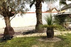 20-02-australischer Grasbaum 01