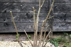 20-06-Oleander 01
