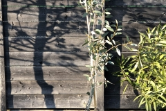20-04-Schnee-Eukalyptus 01