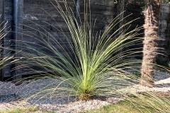 20-04-mexikanischer Grasbaum 01