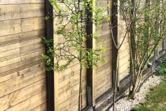 21-05-Poncirus trifoliata 02