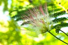 Blüten 2021 06