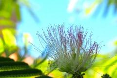 Blüten 2021 07