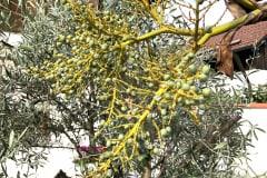 Früchte 2020 05