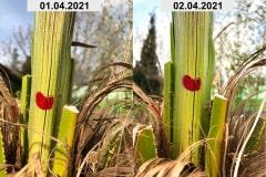 Wachstumskontrolle 2021 01