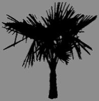 Der Exoten-Konfigurator 4.1: winterharte Exoten für Deinen Garten 4113