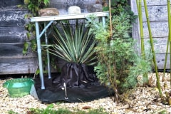 Überdachung: Yucca rigida