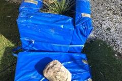 Styropor-Schutzbau: Xanthorrhoea johnsonii