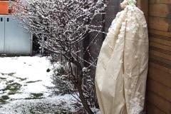 Verpackung: Albizia julibrissin 'Rosea'