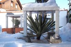 Überdachung: Yucca gloriosa variegata