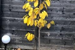 3 Herbst 2020 09