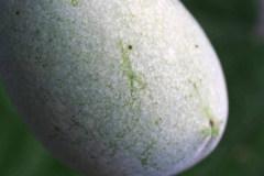Früchte 2019 09
