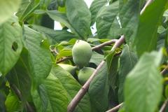 Früchte 2021 08