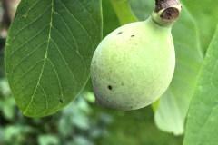 Früchte 2021 01