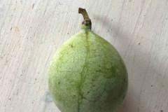 Früchte 2019 28
