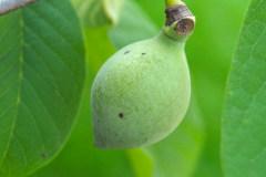 Früchte 2021 03