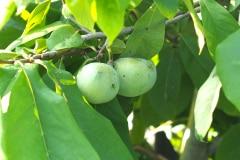 Früchte 2021 12