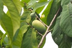 Früchte 2021 10