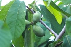 Früchte 2021 04