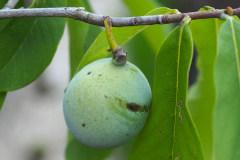 Früchte 2021 11