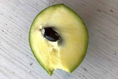 Früchte 2019 23