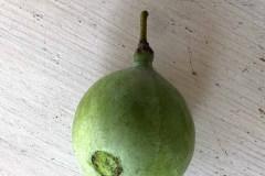 Früchte 2019 22