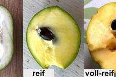 Früchte Vergleich