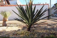 [02/17] Yucca gloriosa