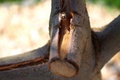 [04/17] Olivenbaum