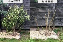 Vergleichsfoto Rückschnitt
