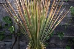 braune Blattspitzen (Feuchtigkeit)