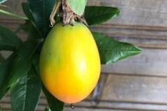 Frucht 2020 10