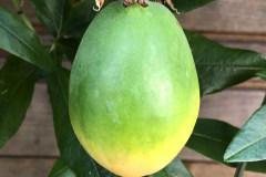 Frucht 2020 09