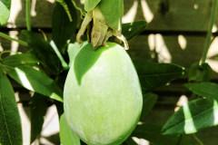 Frucht 2020 05