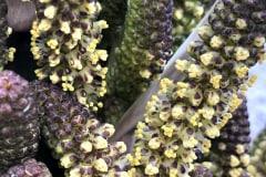 Blüten 2021 05