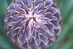 Blütenstand 2021 08