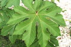 Blätter 2021 09