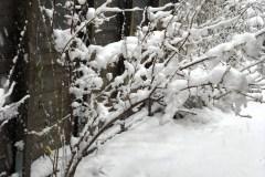 2018/19 chinesische Winterblüte 01