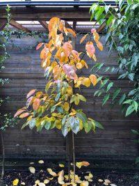 Gartenblog 32