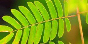 Exotengarten: Blätter